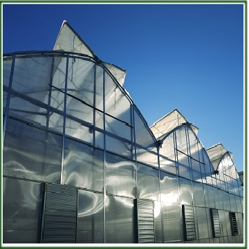 Greenhouses and Greenhouse construction in Iran
