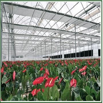 گلخانه و گلخانه سازی در ایران
